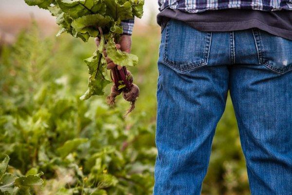ubezpieczenie rolnika częstochowa